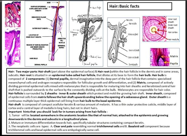 Quick dx. Hair. Basic facts