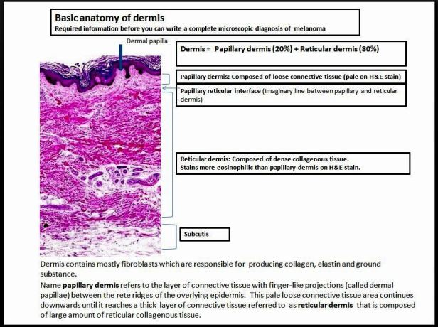 Quick dx. Basic anatomy of dermis